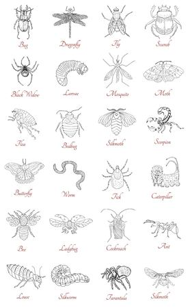 weevils: Big collection with various hand drawn insects isolated on white. Doodle line art illustration and graphic sketch, black and white vector with icons and lettering, vintage animals set Illustration