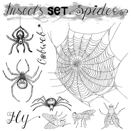 tarantula: Graphic set with isolated spiders (black widow and tarantula), fly and cobweb. Black and white vector illustration with hand drawn elements. Halloween collection.