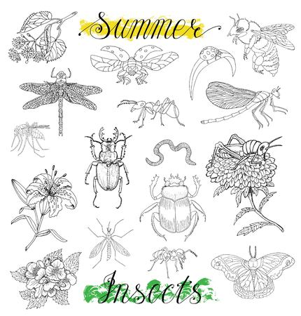 Collection with hand drawn summer insects and flowers isolated on white. Doodle line art illustration and graphic sketch, black and white vector with icons, vintage set Illustration