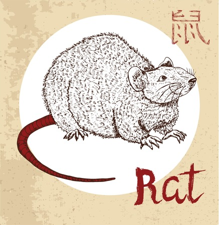 year of the rat: Chinese zodiac symbol of hand drawn rat or mouse with lettering. Horoscope and astrological sign of asian new year calendar. Graphic drawing with engraved animal. Chinese hieroglyph means Rat Illustration