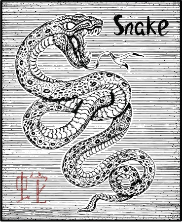 snake calendar: Engraved illustration of zodiac symbol with Snake and lettering. Horoscope and astrological sign of asian new year calendar. Graphic line art with animal. Chinese hieroglyph means Snake