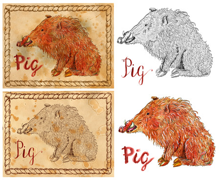 Design set with vintage drawings of chinese calendar zodiac symbol - Pig or Boar. Horoscope and astrological new year sign for card, poster. Graphic, engraved and watercolor illustration with animal