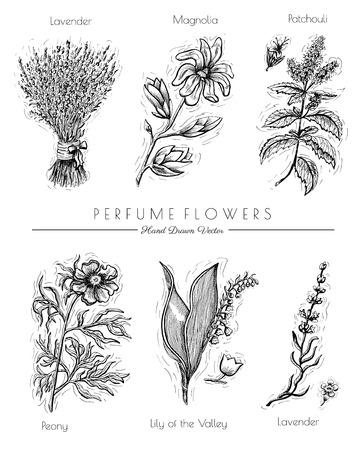 Il grafico ha impostato con i fiori di profumo isolate su bianco - lavanda, patchouli, peonia, magnolia. disegnata a mano illustrazione inciso. disegno d'epoca in stile schizzo. collezione di piante aromatiche