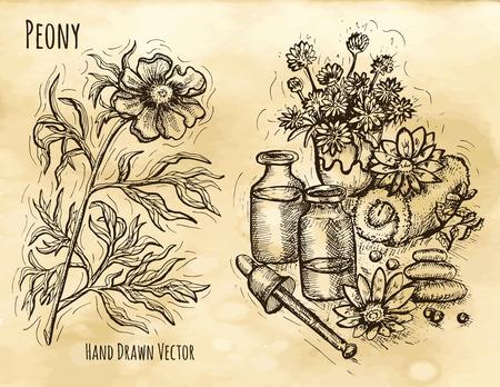 Il grafico ha impostato con i cosmetici naturali nature morte e fiori di peonia. disegnata a mano illustrazione inciso. disegno d'epoca in stile schizzo. set pianta aromatica profumeria Vettoriali