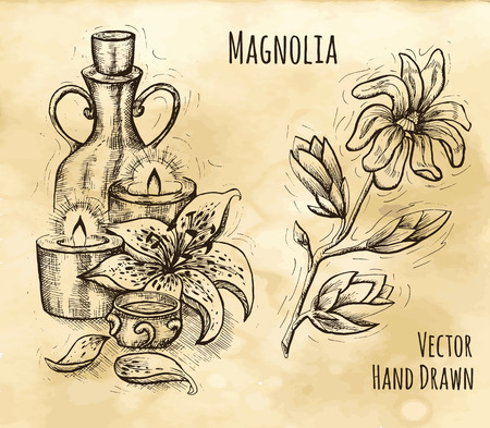 spa still life: Graphic still life with natural cosmetics, candles, lily and magnolia flower. Hand drawn engraved illustration. Vintage drawing in sketch style. Aromatic perfumery plant set Illustration