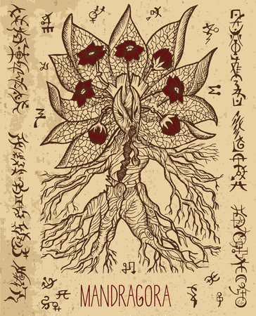 diabolic: Mystic illustration with mandragora magic root and occult symbols. Hand drawn engraved vector illustration. There is no foreign text in the image, all symbols are imaginary and fantasy ones. Illustration