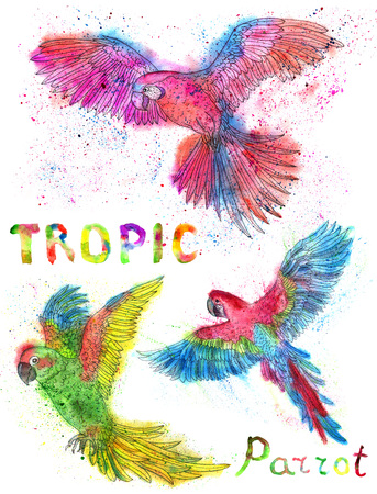 Watercolor set with colorful tropic parrots with brush drops and lettering isolated on white, hand drawn birds