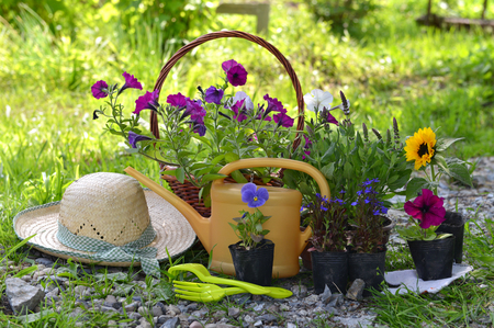 Garden still life with straw hat, petunia flowers and watering can against grass background. Vintage planting flowers concept Archivio Fotografico