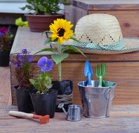 cultivate: Still life with flowers in planting pots, straw hat and garden tools in cute bucket. Vintage planting flowers concept. Beautiful summer background Stock Photo