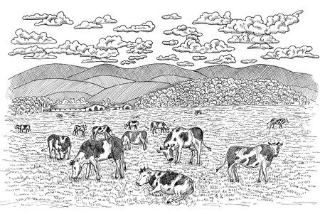 Black and white illustration of cows feeding on the field. Vintage engraving, hand drawn design illustrations for label, poster. Rural farm concept