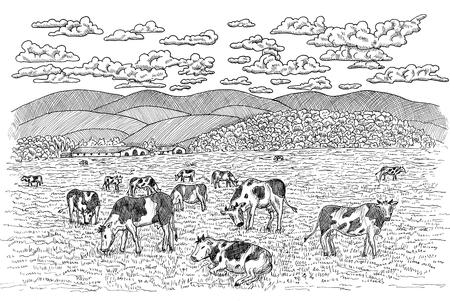 Zwart-witte illustratie van koeien die op het gebied voeden. Vintage gravure, hand getrokken ontwerp illustraties voor label, poster. Landelijk boerderijconcept