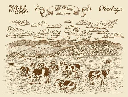 Landbouwgrond met koeien, vignet banner en belettering op textuur achtergrond. Vintage vectorgravure, hand getrokken ontwerp illustraties voor label, poster. Landelijk boerderijconcept