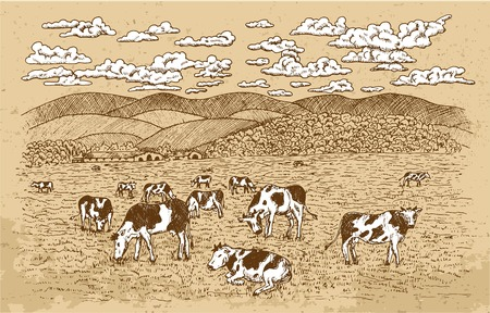 Cows feeding on the grassland, with texture background and white clouds. Vintage vector engraving, hand drawn design illustrations for label, poster. Rural farm concept