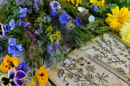 Open book with botanical drawings and summer scrolls of  plants and flowers. Esoteric, occult and mystic concept, alternative medicine background with natural healing ingredients.