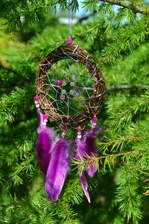 Dream catcher with purple feathers hanging on fir tree branches. Mystic vertical background