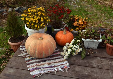Pumpkins, rug and autumn flowers on wooden planks. Halloween and thanksgiving background with harvest