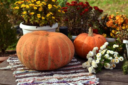 Pumpkins and colorful chrysanthemum flowers in pots on rug outside. Halloween and thanksgiving background with harvest