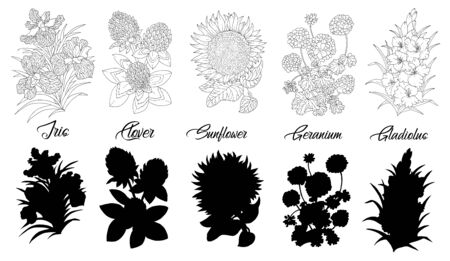 Set of black and white outline flowers - iris, clover, sunflower, geranium, gladiolus. Vector botanical illustration and silhouette, line art graphic drawing. See my full collection of flowers.