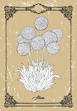 Vector drawing of Allium flower on texture background. Vintage botanical illustration with floral element and nature object in frame, line art graphic drawing. See my full collection of flowers.