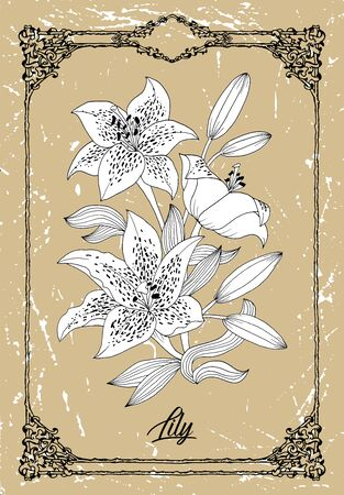 Vector black and white drawing of lily flower on texture background. Vintage botanical illustration with floral element and nature object in frame, line art graphic drawing. See my full collection of flowers. Illustration
