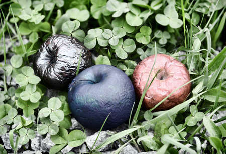 Three colorful poisonous or painted apples in the clover grass. Esoteric, gothic and occult background with magic objects, mystic and fairy tale concept