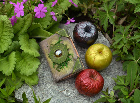 Book with enchanted spells and three magical poisonous apples in the garden. Esoteric, gothic and occult background with magic objects, mystic and fairy tale concept Stock fotó