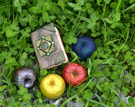Hand crafted witch book with apples in the garden. Esoteric, gothic and occult background with magic objects, mystic and fairy tale concept Stock fotó