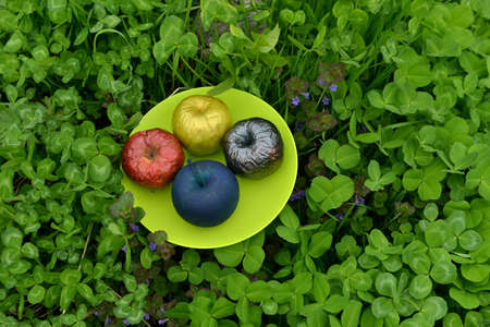Painted or poisonous magical apples on the plate in the clover grass. Esoteric, gothic and occult background with magic objects, mystic and fairy tale concept