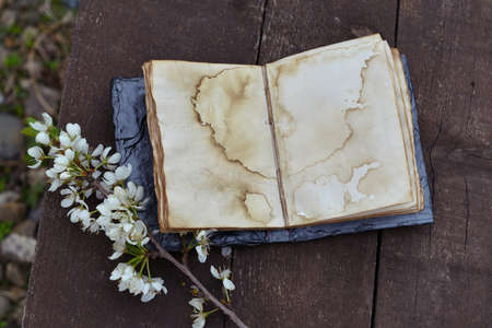 Vintage open diary with empty pages and blooming tree branch on wooden planks. Esoteric, gothic and occult background with magic objects, mystic and fairy tale concept
