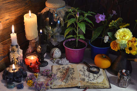 Mysterious still life with open diary book with botanical drawing, pepper plant in pot and candles on witch table. Esoteric, gothic and occult background. Halloween fortune telling concept. Zdjęcie Seryjne - 157275571