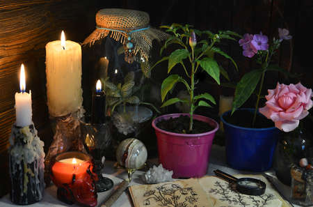 Mysterious still life with burning candles and plants in pot on witch table. Esoteric, gothic and occult background with magic objects. Halloween fortune telling concept.