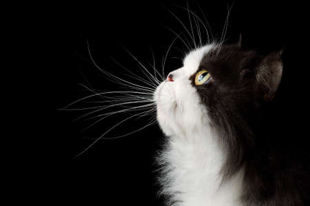 head of cat on black background Stock Photo - 9389353