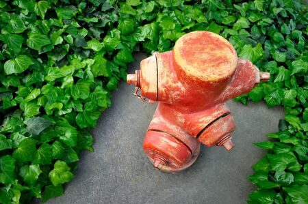 fire surround: red fire hydrant surround by  green leaves