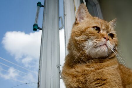 Portrait of a red cat sitting against  an old window photo