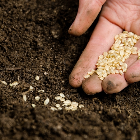 planting: Closeup of a males hand planting seeds in ground Stock Photo