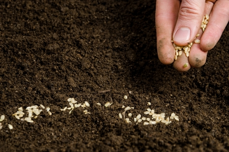 Closeup of a males hand planting seeds Stock Photo - 13758813