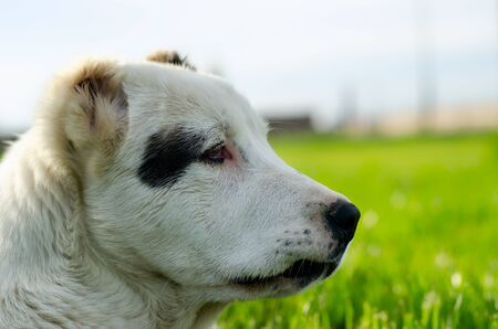 a portrait of dog's head with a green field on backround Stock Photo - 13761516