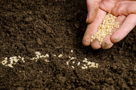 seeding: Closeup of a males hand planting seeds in soil Stock Photo