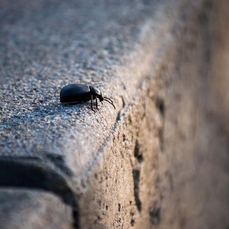 decide: Bug decide qu� hacer en el borde del abismo Foto de archivo