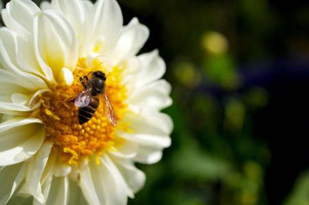 sweetly: The beautiful sweetly communication between a bee and a flower