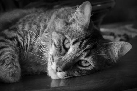 Tabby portrait Фото со стока - 90580929
