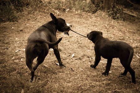 Dogs at play Фото со стока - 90580931