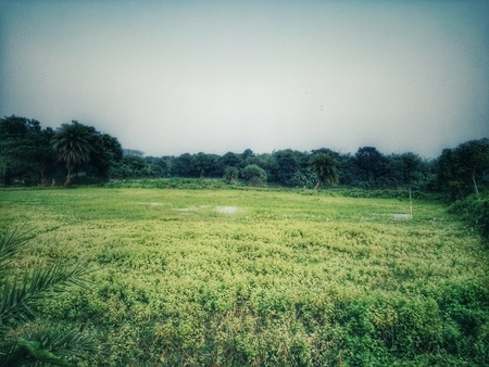 A Green Landscape of West Bengal