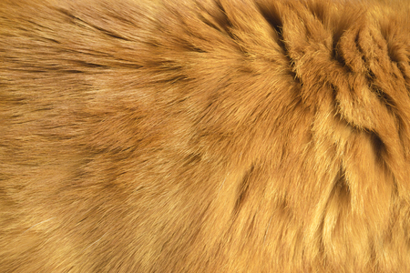 Bright red fur texture. Closeup background Stock Photo