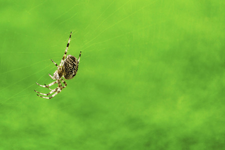 Beautiful brown spider on blurred green background. Closeup