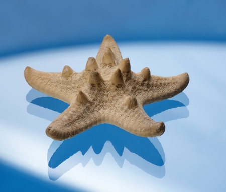 Starfish on a blue background photo