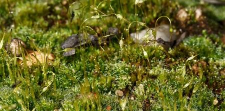 microcosm: Spring microcosm