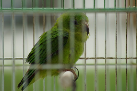 caged: Caged Parrot