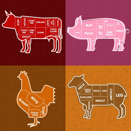 veal sausage: Vector illustration of beef, pork, lamb and chicken and cooking tools. Illustration
