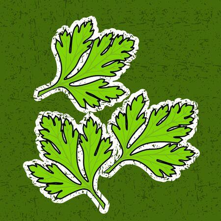 петрушка: свежие листья петрушки